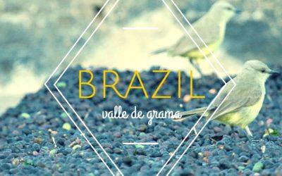 Brewing & Tasting: Brazil Valle de Grama